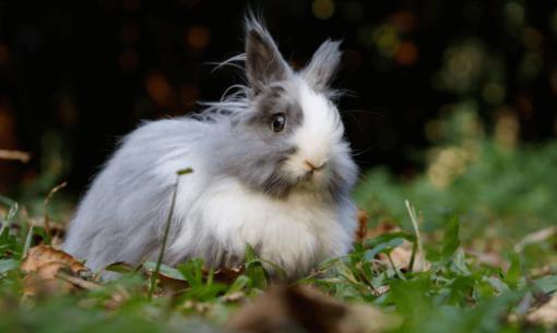 oogverzorging-konijnen-alles-wat-u-moet-weten