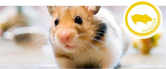 hamsters-feeding-guide