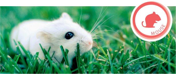 mice-feeding-guide