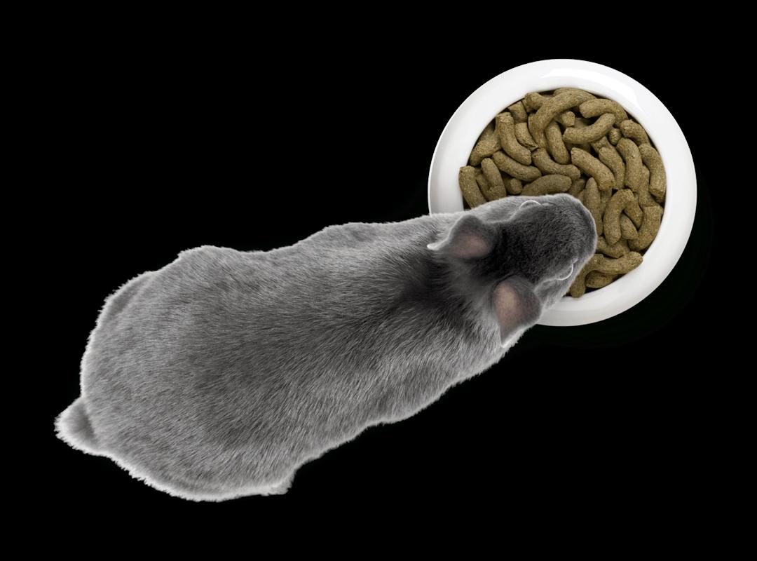 rabbit-eating