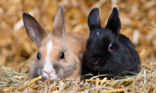 Twee konijnen bij elkaar