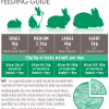 House-Rabbit-Feeding-Guide