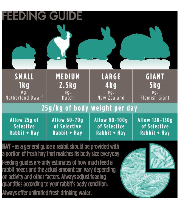 Adult-Rabbit-Feeding-Guide