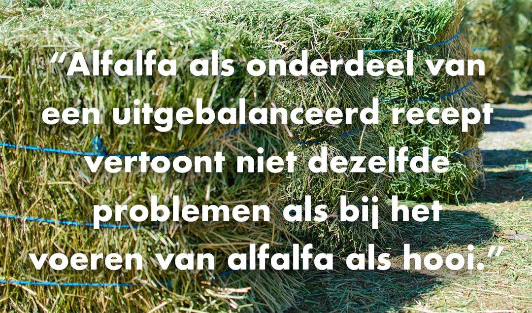Dutch-Alfalfa