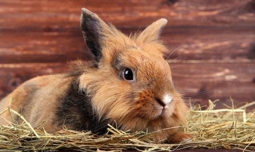 flystrike-rabbit-hutch