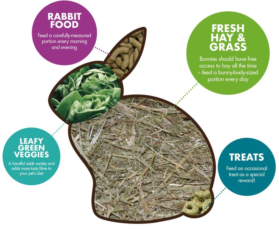 Rabbit infographic depicting portion sizes