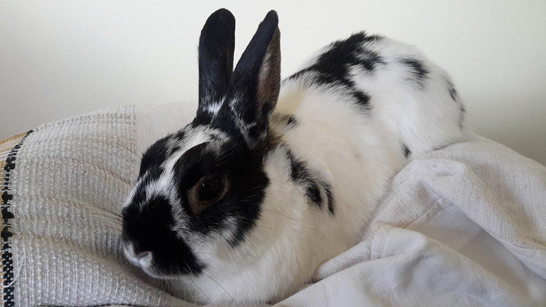 rabbit-inside